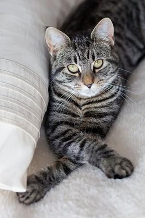 Cute Tabby Cat