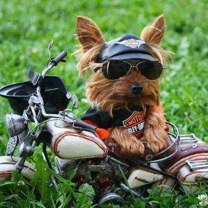 Dog bike funny