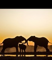 Elephant family - world-wildlife-fund photo