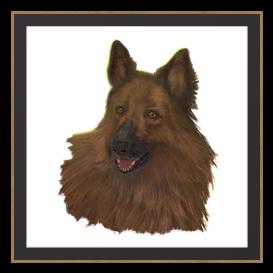 Fight Dog Bruno