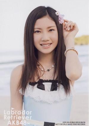 Kitagawa Ryoha - Labrador Retriever