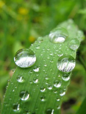 Macro-Photography-Water-Drops