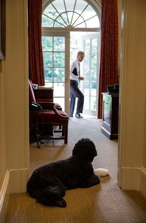 Presient Barack Obama And Family Dog, Bo