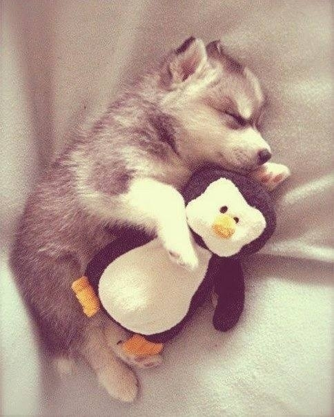 Puppies and their Stuffed Animals