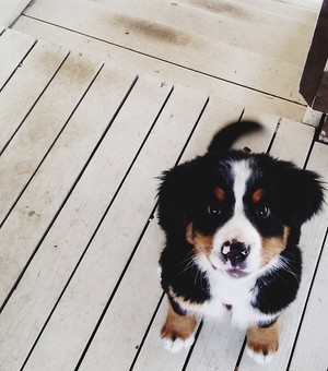 anjing, anak anjing