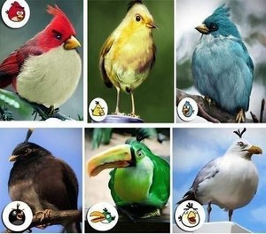 Real Angry Birds!!