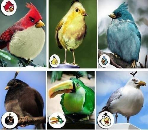 angry birds wallpaper entitled Real Angry Birds!!