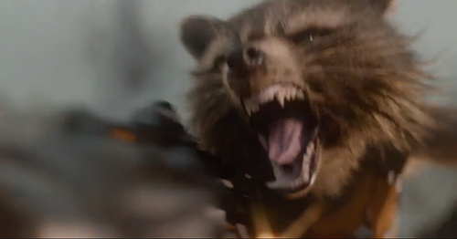 Guardians of the Galaxy 바탕화면 with a common opossum and an opossum entitled Rocket Raccoon