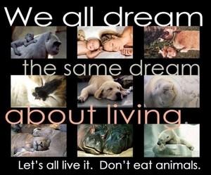 We all dream the same dream...