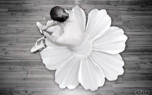bunga tutu