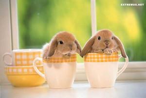 Life as bunniexx