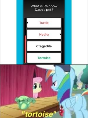 """Tortoise"""