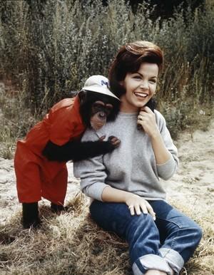 "1965 Disney Film, ""A Monkey's Uncle"""