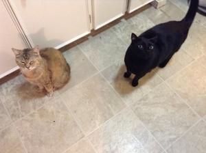 앤젤 and piglet 2