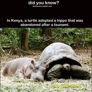 Animal Adoption in the Wild