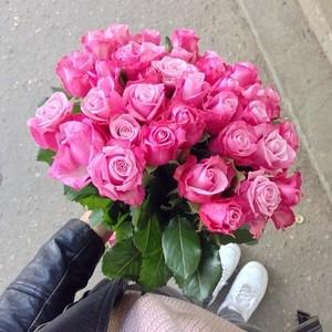 Beautiful hoa hồng