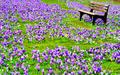 Bench              - spring photo