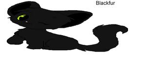 Blackfur of wind clan /tiger clan
