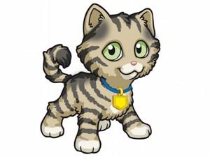 Camillo the Kitty
