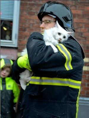 Cat And Its Rescuer
