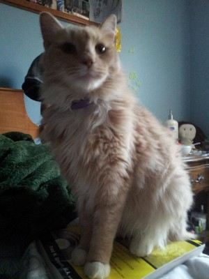 Cat Looking Regal