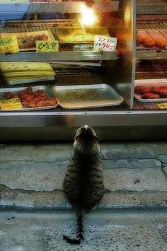 Cat Visiting A isda Market