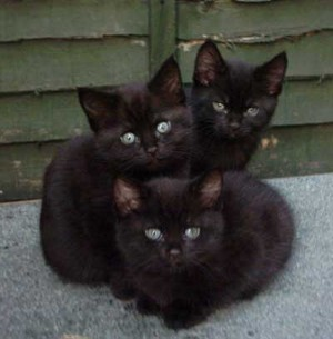 Cute Cuddly Kittens