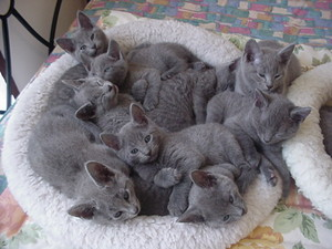 Cute Cuddly chatons