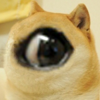 랜덤 바탕화면 called Doge Huge Eye