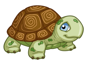Evershell the tortue