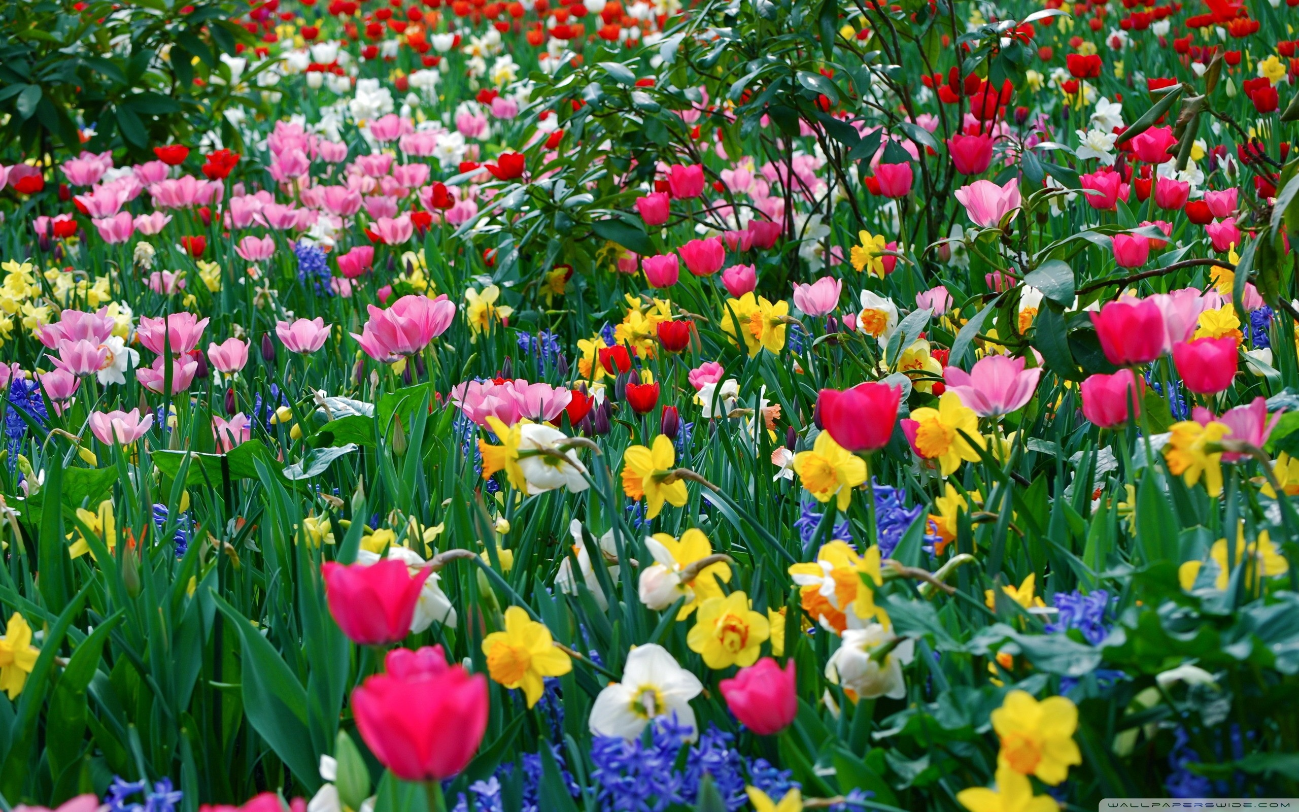 Spring Images Flowers Flowers Everywhere Hd Wallpaper And Background