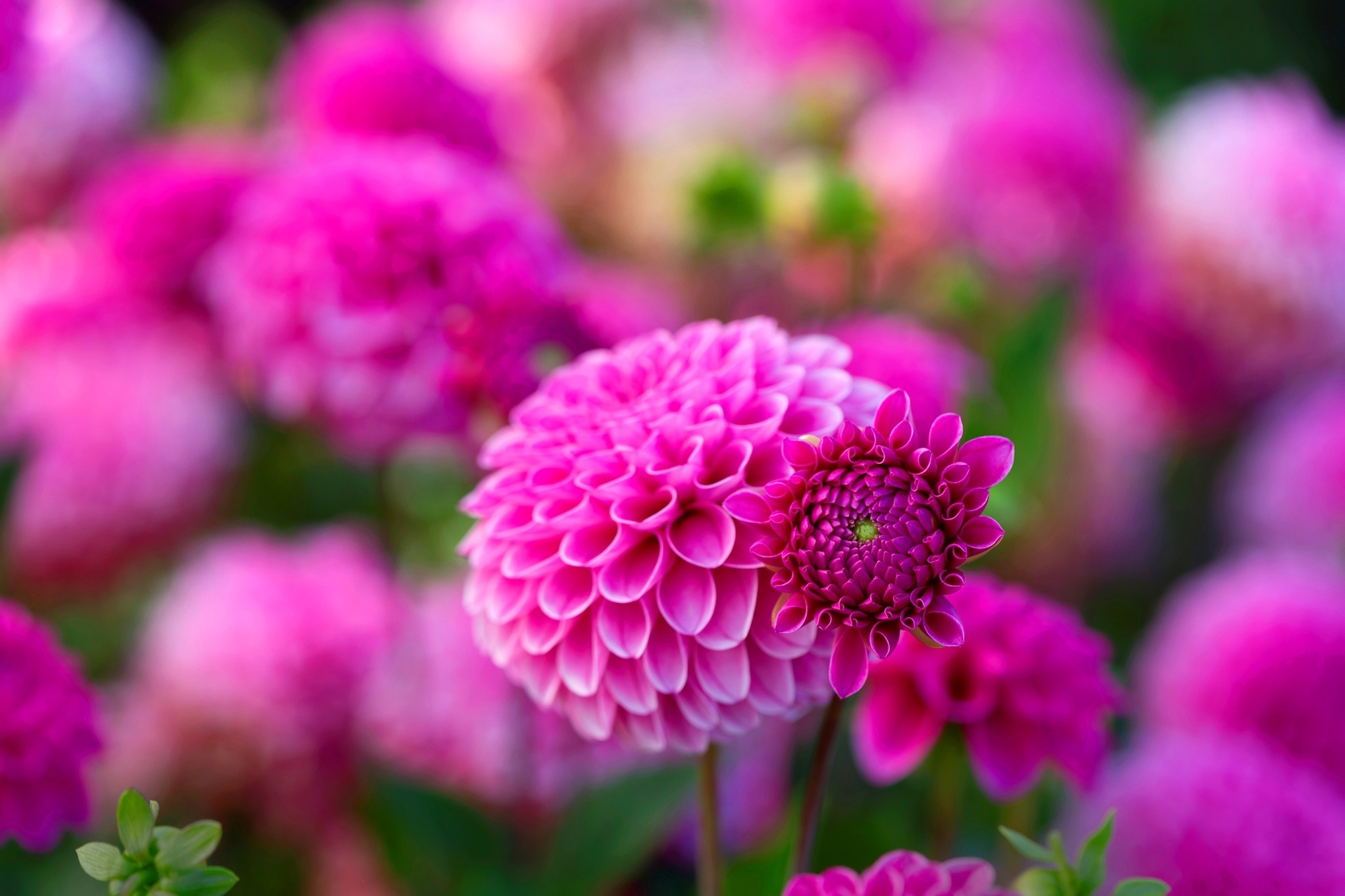 Flowers Images Flowers Hd Wallpaper And Background Photos 37212414
