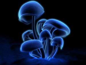 Glowing mushrooms