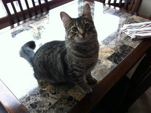 Gracie, The Cat
