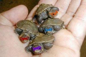 IRL Ninja Turtles