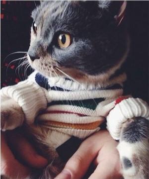 Kitty Fashionista