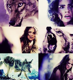 Malia as a coyote