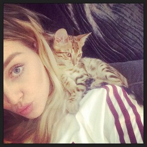 New selfie of Perrie with her and Zayns new kitten