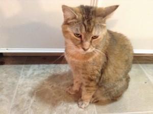 Piglet girl cat