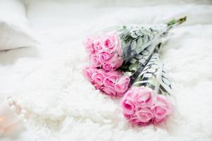 màu hồng, hồng hoa hồng