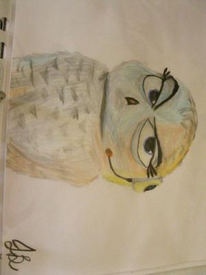 PoM Movie Owl