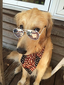 The coolest dog I've ever seen