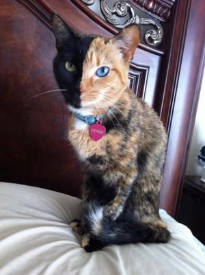 Venus, The Cat