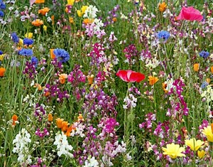 Wildflowers ✿❀