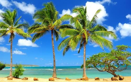 Ari & Rachel ♥ 壁纸 containing a royal palm, a beach, and an 海滨 titled Palm trees