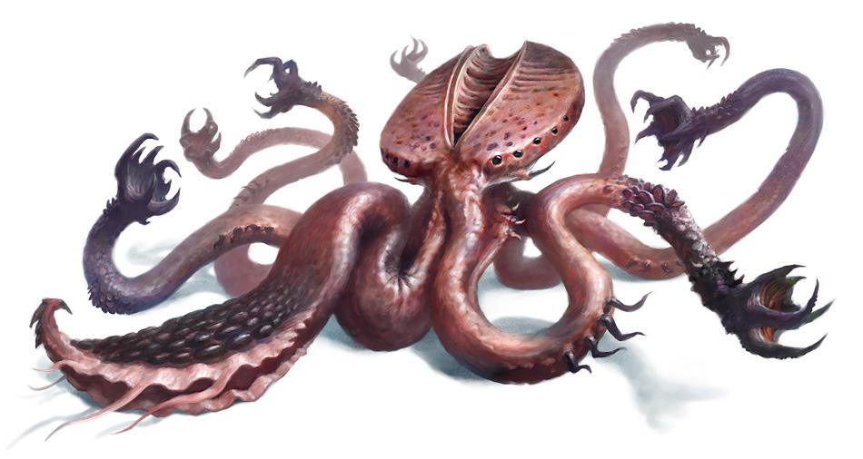 octopus1234