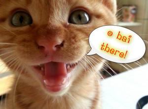 ohai kitty