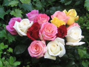 roses(my fave flower)