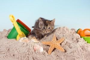 summer kitten