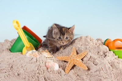 Cats wallpaper containing a starfish entitled summer kitten